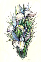 Beautiful iris - watercolor on textured paper