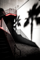 Stairs and shadows of palm trees