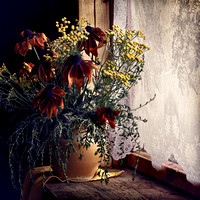 Still life with flowers on the windowsill